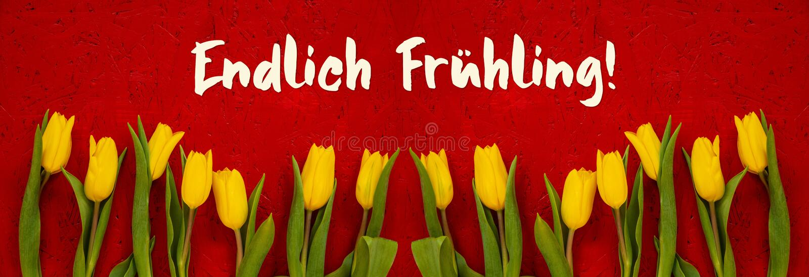 Baner Of Yellow Tulip, Red Background, Endlich Fruehling Means Finally Spring stock photos