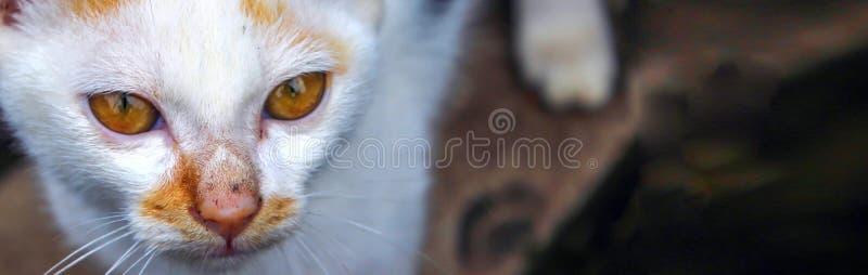 Banerformatet, den hemlösa katten gör ögonglober arkivfoton