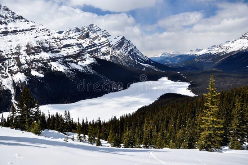 banff加拿大冻结的湖国家公园peyto 库存照片