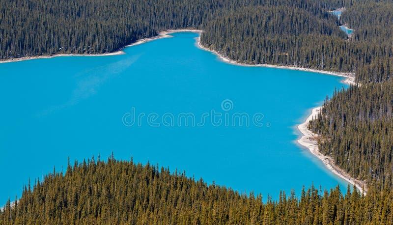 banff加拿大湖国家公园peyto 免版税库存照片