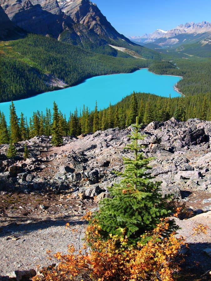 banff湖国家公园peyto 库存照片
