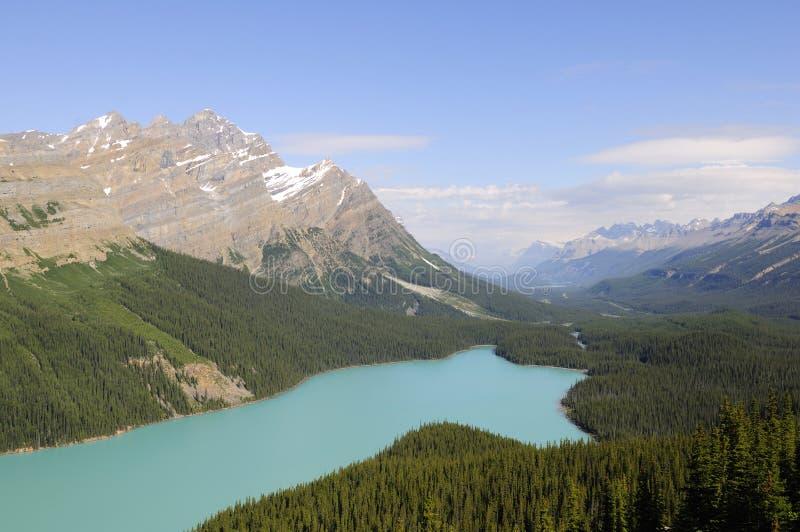 banff湖国家公园peyto 免版税库存图片