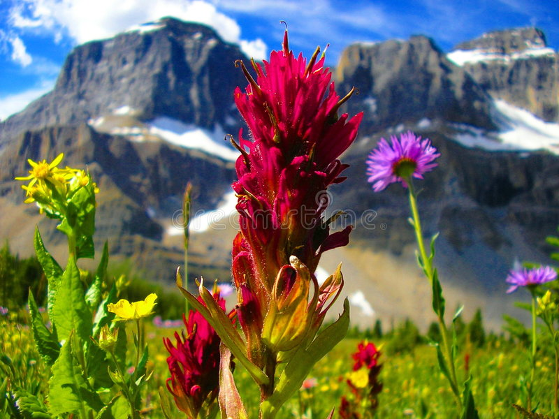 banff εθνικά wildflowers πάρκων στοκ εικόνα