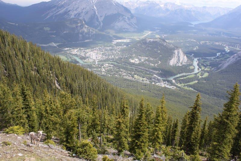 Banff Alberta Canadá fotografía de archivo libre de regalías