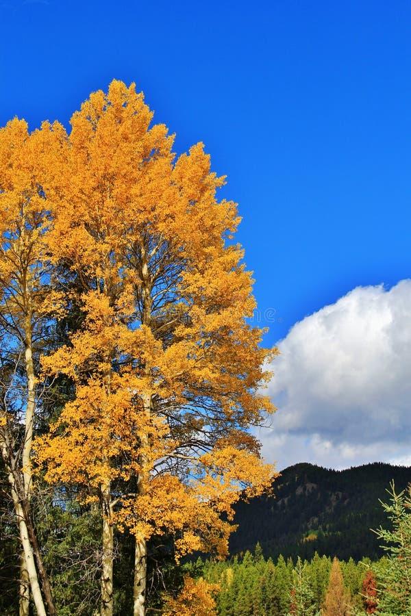 Banff, Alberta, Kanada obraz royalty free