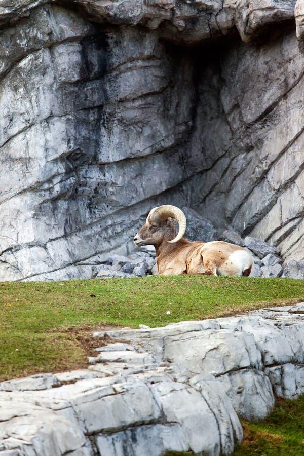 Download Banff National Park stock photo. Image of kananaskis - 11395518