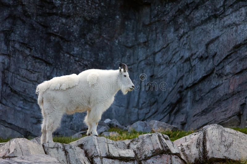 Banff-Nationalpark stockfotografie