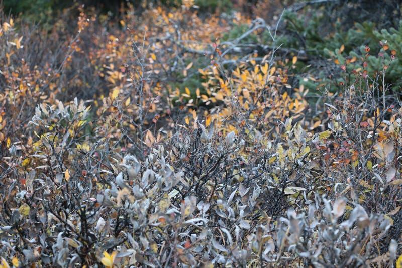 Banff Wildflowers royalty-vrije stock foto