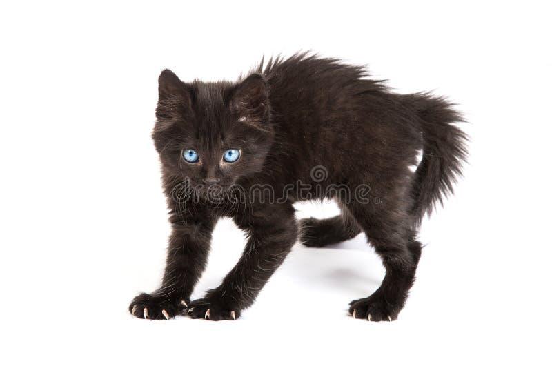 Bang gemaakt zwart katje die zich op een witte achtergrond bevinden stock afbeelding
