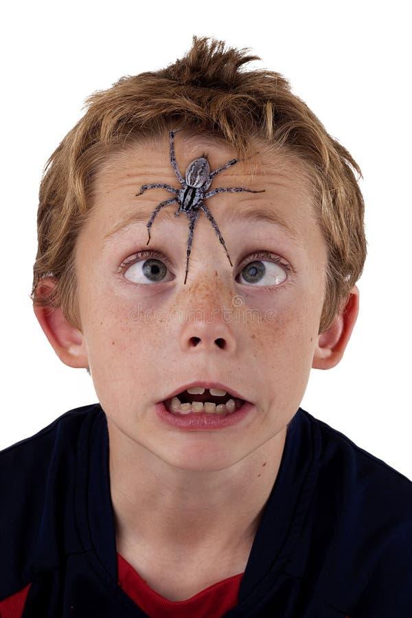 Bang gemaakte jongen met spin royalty-vrije stock foto's