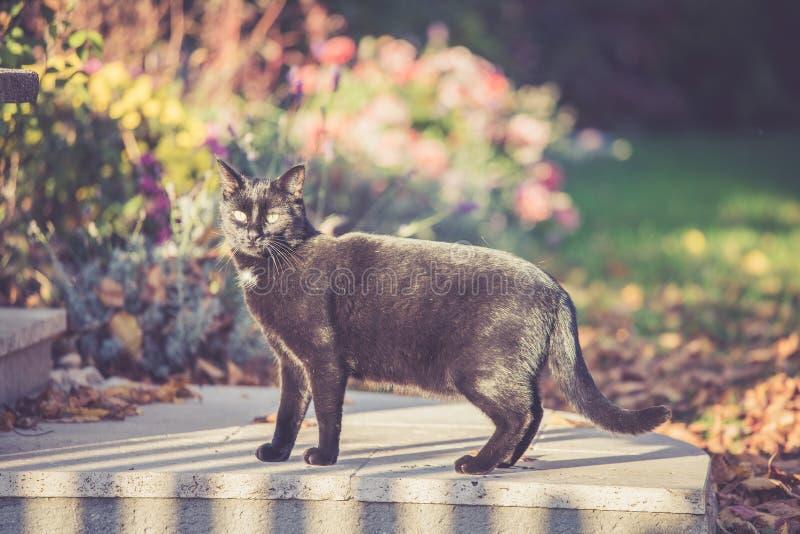 Bang gemaakte zwarte kat in de tuin stock fotografie