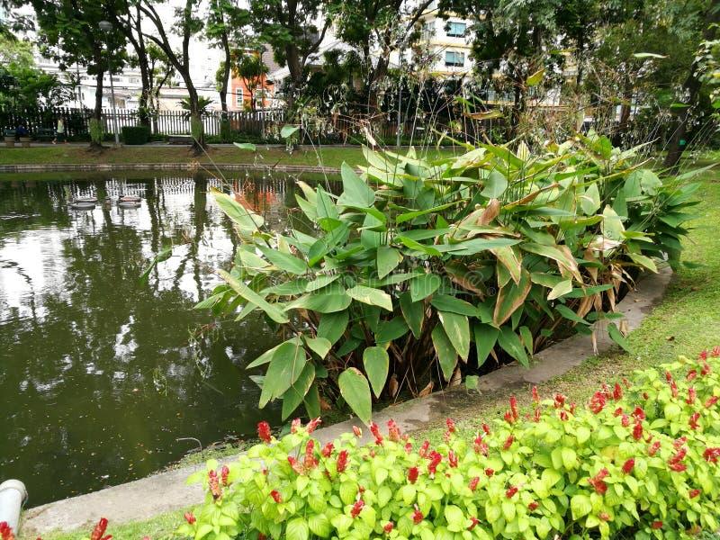 Bangkok - Santiphap Park Peace Park royalty free stock photography