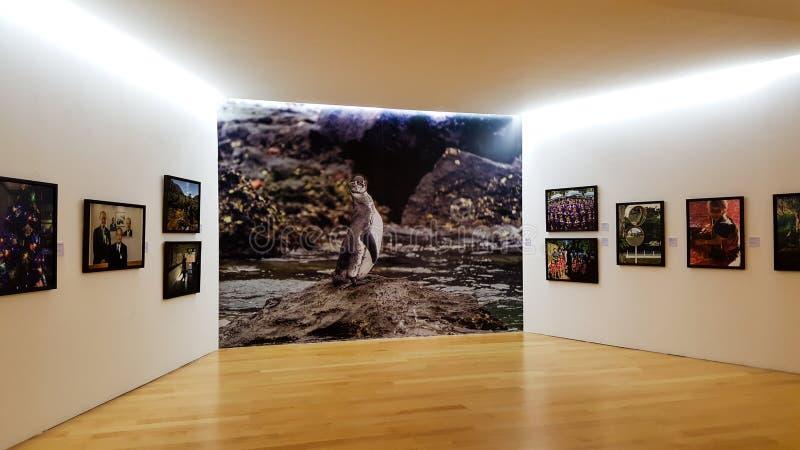 BANGKOK, TAILANDIA - 11 GENNAIO 2018: Il pinguino ed altre foto sono indicati come galleria nell'arte di Bangkok & nel centro del fotografie stock