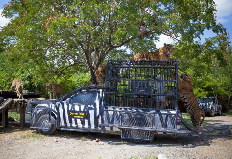 BANGKOK THAÏLANDE - 12 JUIN : troupeau de alimentation de personnel de zoologie de tige image libre de droits