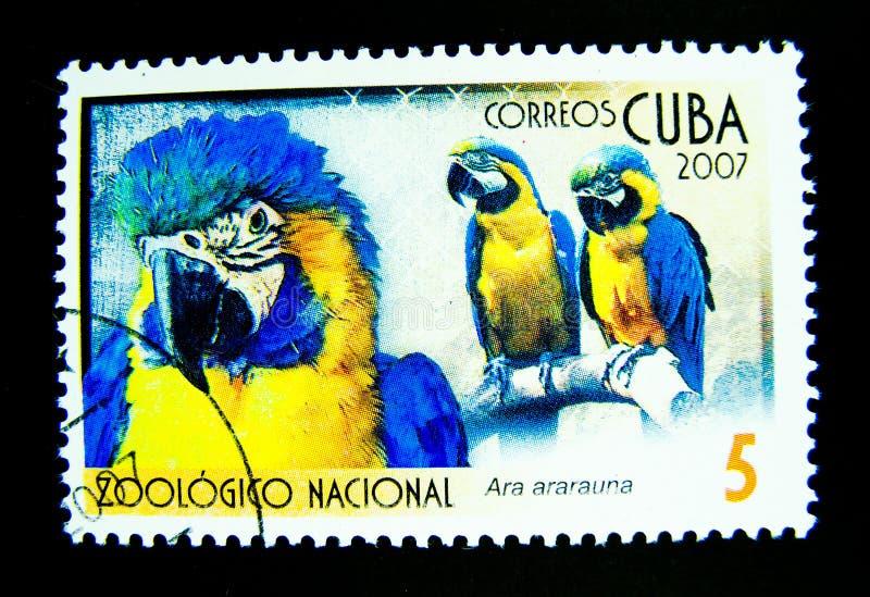 A stamp printed in Cuba shows an image of Ara ararauna bird. stock image