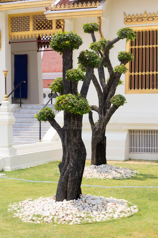 Pollarded trees in Wat Thep Sirin, Thrawat stock images
