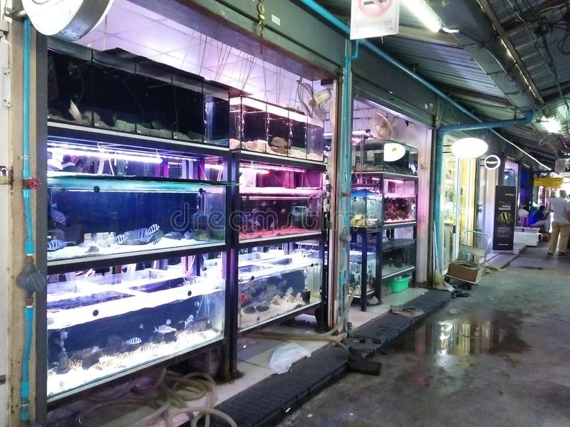 BANGKOK, THAILAND - 12 Aug 2019: Aquarium fish at the fish market. Pets and Pet Accessories Zonesections 8, 9, 11, 13,JJ Chatuchak Weekend Market- more 8,000 stock images