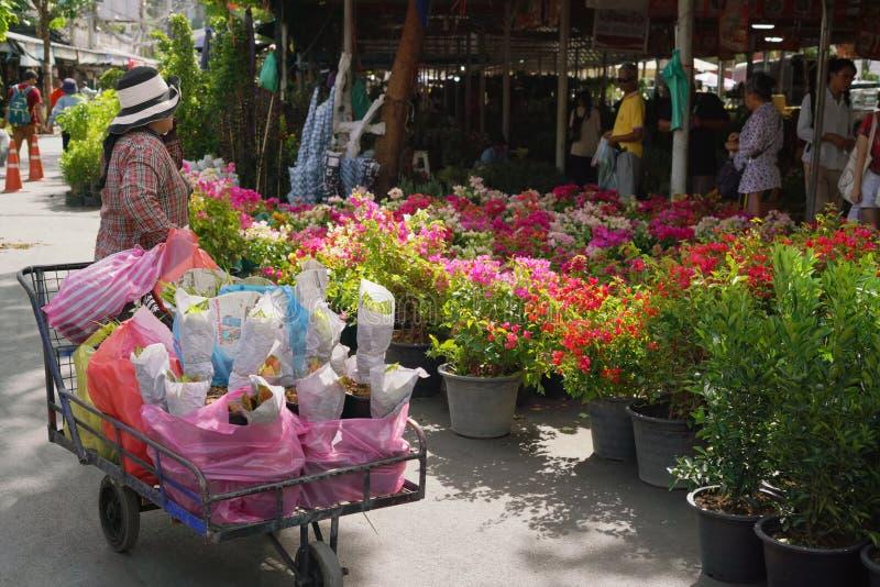 BANGKOK, THAILAND-JULY 30,2019: Chatuchak rośliny rynek, Chatuchak rynek otwarcie na Środzie i Czwartku ja jest Chatuchak obraz royalty free