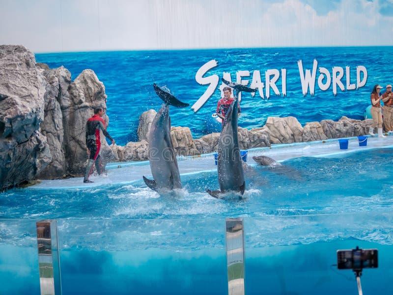 BANGKOK, THAILAND - JUNI 16.2018: De Dolfijnen tonen bij Safariwereld De intelligentste vaardigheid en de trucs tonen Safari Worl stock fotografie