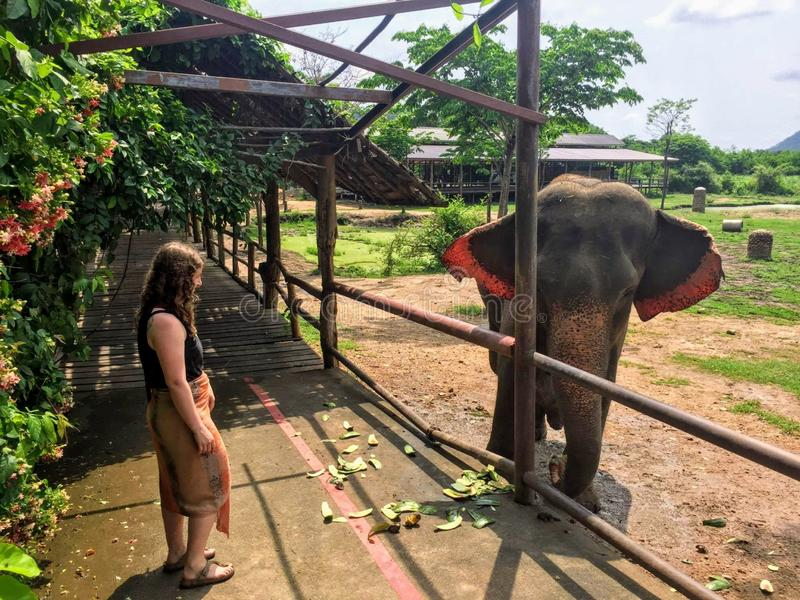 A young female tourist saying hello to a rescue elephant at ElephantsWorld royalty free stock photo