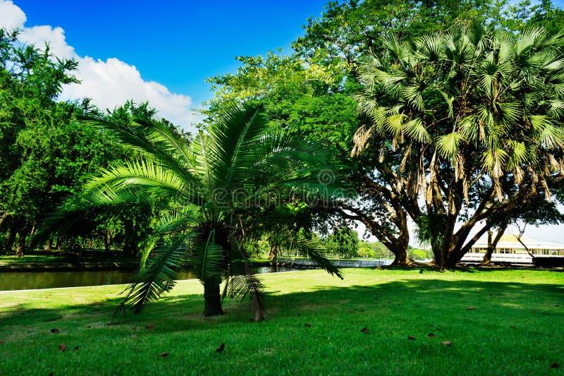 Bangkok, Thailand - 28. Oktober 2016: Baum des Parks des Zwergs öffentlich in Bangkok, Thailand Fotografie am Tag des blauen Himm stockbilder