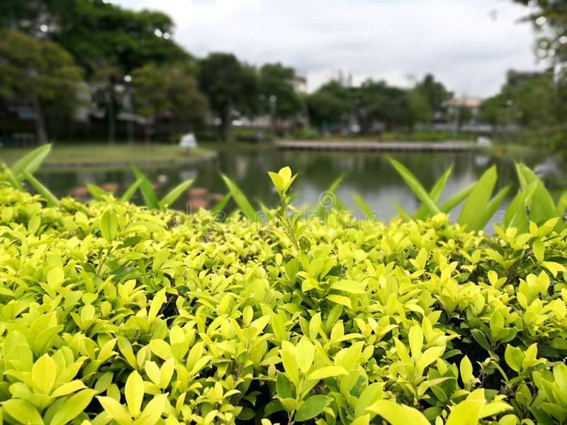 Bangkok - Santiphap Park Peace Park stock photography