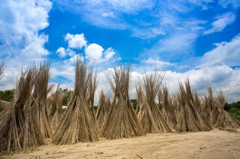 A sunny day, Blue white green and brown color layer in beautiful bangladesh jute drying scene at stock photo