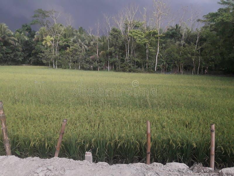 Nice Weather sky. Bangladesh noakhali lokeshwar royalty free stock photography