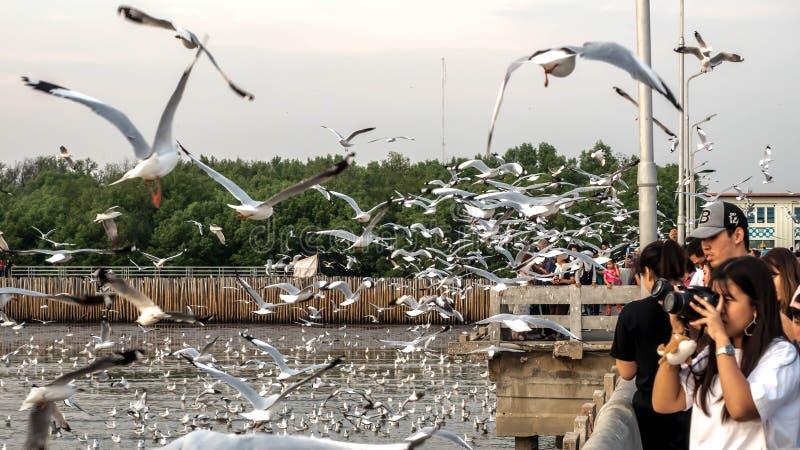 Bangpu, Tailandia 15 gennaio - 2018: Punto di vista della gente e dei gabbiani che sorvolano il mare al centro ricreativo di Bang fotografie stock