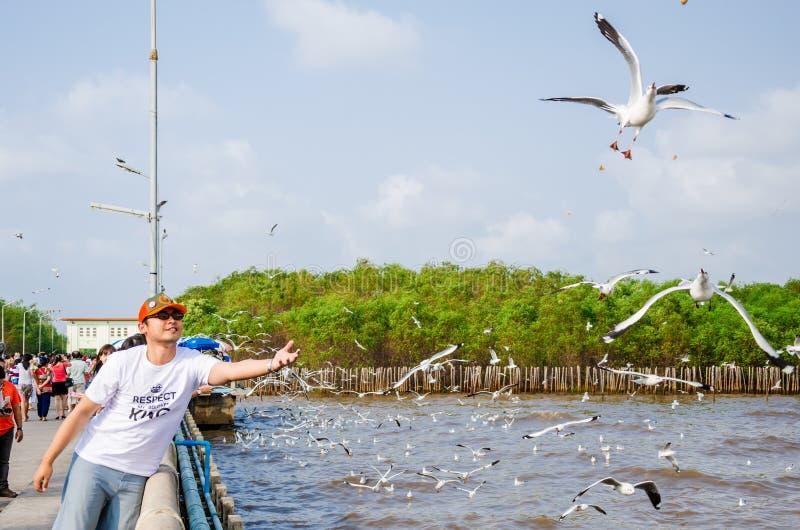 Bangpu, Thailand : Men throw food to the seagulls royalty free stock photos