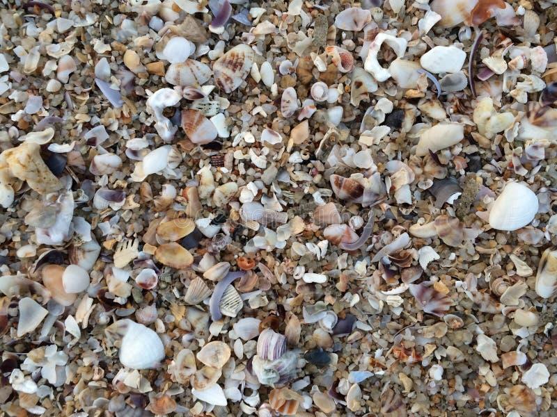 Bangsaen海滩 库存图片