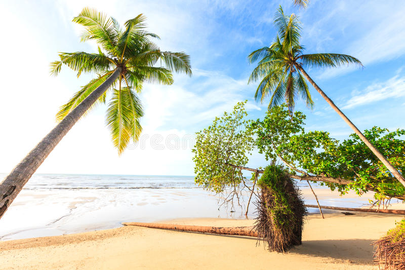 Download Bangsak Beach In Blue Sky And Palm Trees Stock Image - Image: 33080859