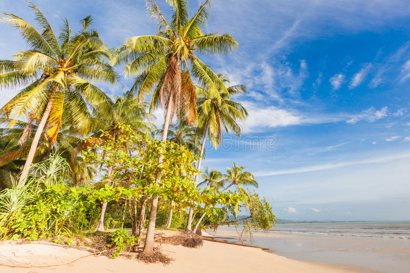 Download Bangsak Beach In Blue Sky And Palm Trees Stock Image - Image: 33343021