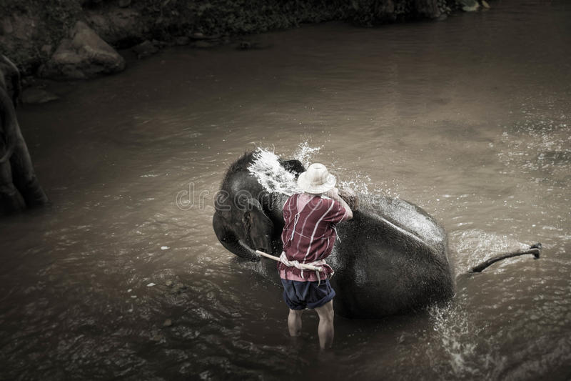 Banhando elefantes em Mae Sa Elephant Camp, Mae Rim, Chiang Mai fotografia de stock