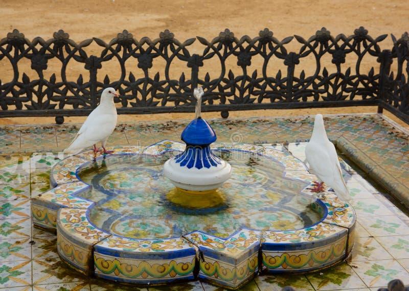 Banhando pombas, Sevilha, Andalucia, Spain imagens de stock