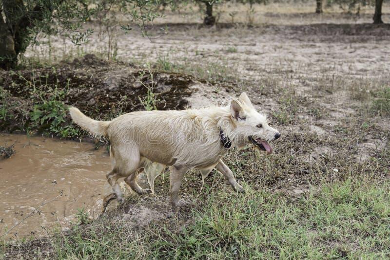 Banho de lama do cão fotos de stock