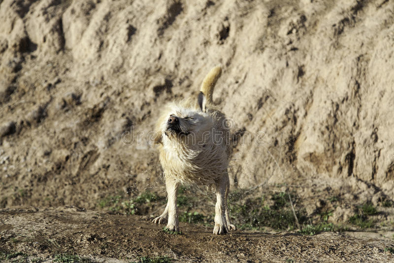Banho de lama do cão foto de stock royalty free