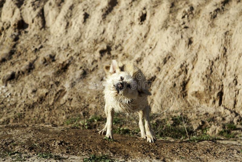 Banho de lama do cão fotos de stock royalty free