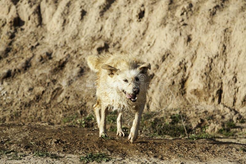 Banho de lama do cão fotografia de stock royalty free