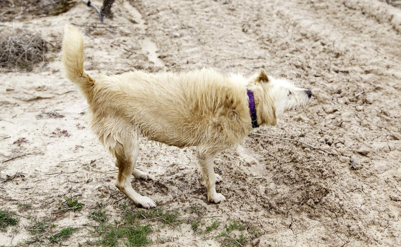 Banho de lama do cão imagem de stock royalty free