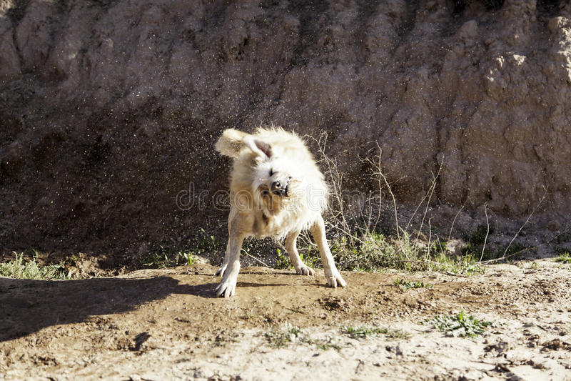 Banho de lama do cão imagem de stock