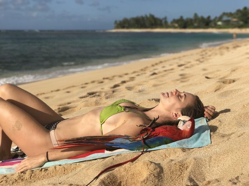 Banho de sol da arara e da menina foto de stock royalty free