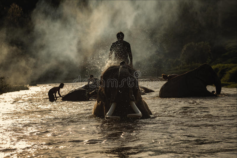 Banho do elefante foto de stock