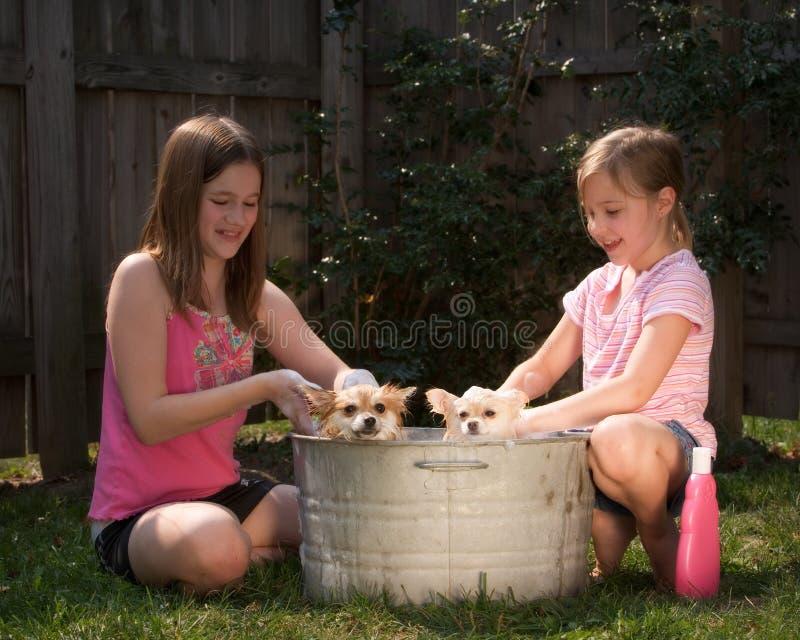 Banho do filhote de cachorro fotografia de stock