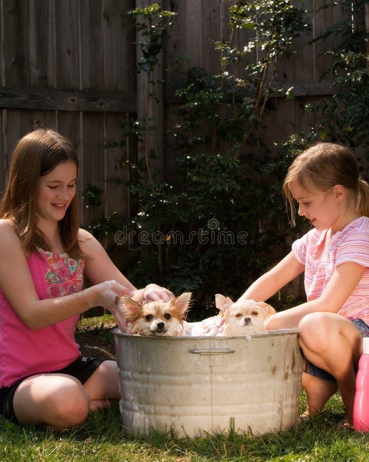 Banho do filhote de cachorro imagens de stock