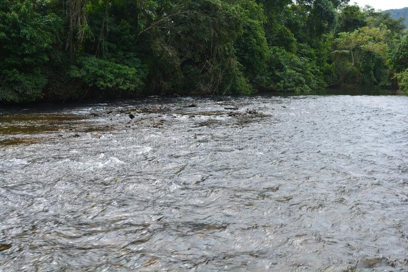 Banho no rio foto de stock royalty free