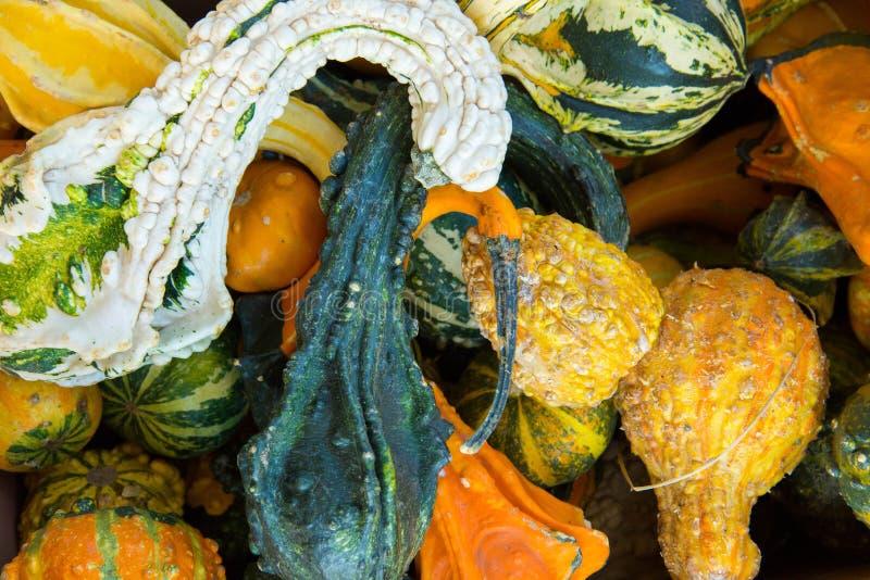 Bani i gurd świeży ukradziony od gospodarstwa rolnego obraz royalty free