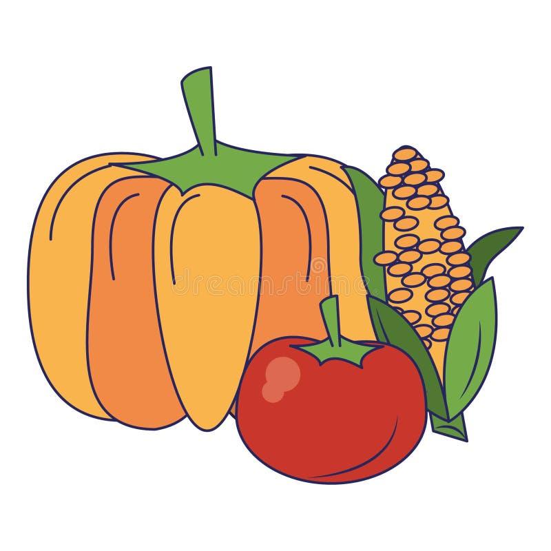 Bania i pomidor z kukurydzanymi ?wie?ych warzyw niebieskimi liniami ilustracji