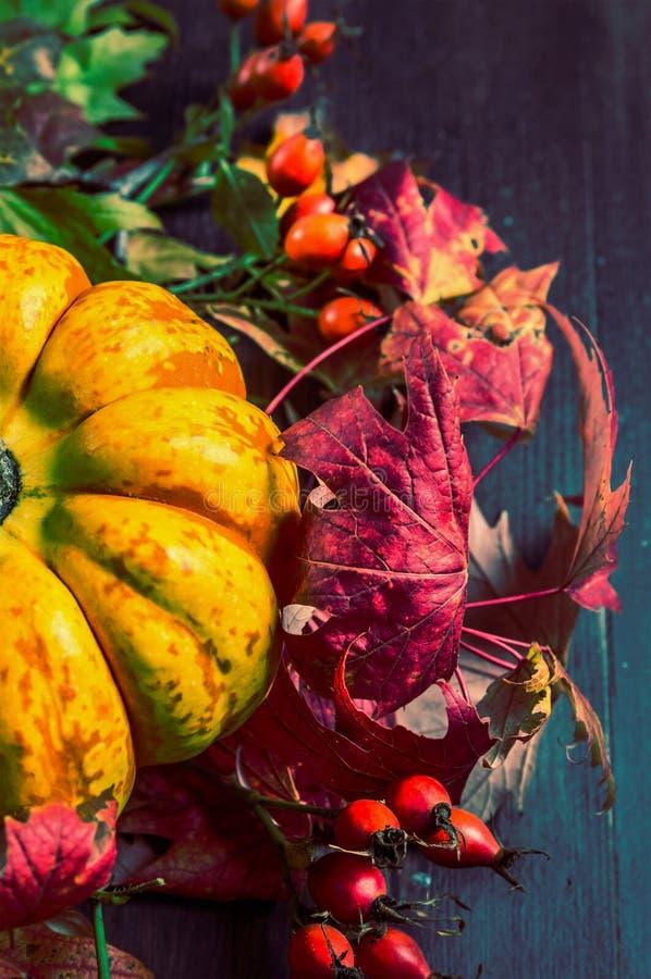 Bania na jesień liściach i różanych biodrach, zamyka up zdjęcie royalty free
