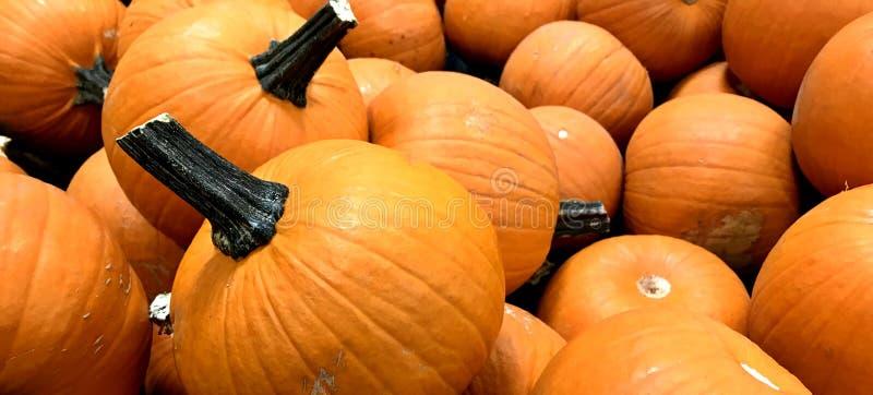 BANIA, pomarańcze, spadku żniwo, dziękczynienie, mały rozmiar, stołowa dekoracja, zdjęcia royalty free